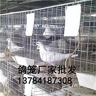 鸽笼鸽子窝及配件供应厂家 三层鸽子养殖笼四层鸽笼