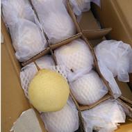 出售过手收购60#河北水晶梨36.5斤,把绿色白专供超市保证质量