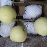 河北皇冠梨收购60#开库把绿,梨白,肉厚,随行出售12000箱
