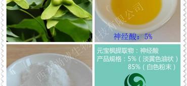 元宝枫籽提取物 天然神经酸90%