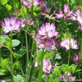 河北绿肥种子一般绿肥种子简介