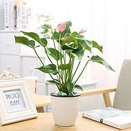 武汉室外花卉出租公司园林养护,武汉单位绿化维护办公室花卉租赁