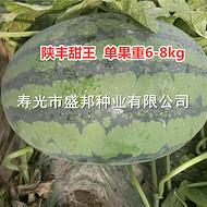 陕丰甜王西瓜种子  高品质中早熟西瓜品种  华冠超霸中熟大果品种