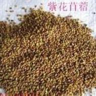 牧草种子苜蓿草种子价格与作用