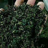 大量供应中药材 茶叶 蒲公英茶叶 蒲公英根 蒲公英种子