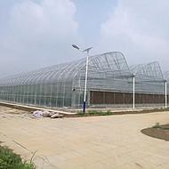 烟台智能温室大棚果树花卉蔬菜种植性价比高