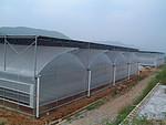 农业专用养殖大棚 畜牧业养殖大棚水产养殖大棚
