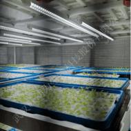 生产型植物工厂项目建设 技术指导 方案规划 植物批量生产工厂建造 植物水培无土栽培培养