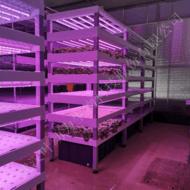 武汉观光型植物工厂 植物批量生产工厂设计 方案技术指导 项目建设 科学教育 观光展览植物生产