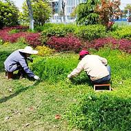 承接绿化养护项目