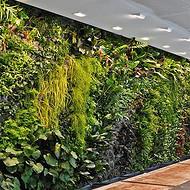 太原植物墙制作设计定制 花卉盆栽租赁养护 批发零售