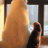 刚出生的小猫可以吃什么?