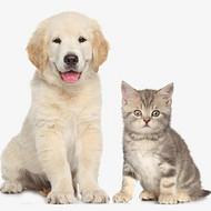 深度盘点猫粮成分里的4个猫腻,看看你家的猫粮买对了吗?