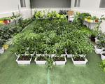 湖北武汉 无土栽培设施 新型水培 气雾培 基质培 栽培技术指导 项目实施方案 整体工程设计 规划 建设