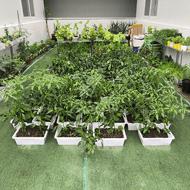 湖北武汉 植物无土栽培设施 新型水培设施 智慧农业设施 项目实施方案 整体工程建设施工