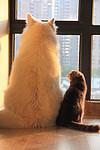 宠物饲养经验,柴犬拉稀可以喂水吗,柴犬拉稀能喂水喝吗