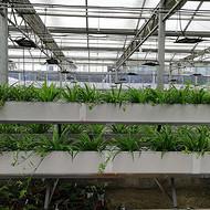 湖北武汉 植物工厂 项目实施方案 整体工程规划 智慧农业设施 技术指导