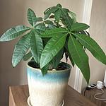 东莞绿植出租 室内植物租摆 汇安园艺绿植出租