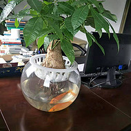 东莞办公室绿植租摆 室内植物租摆 汇安花卉出租