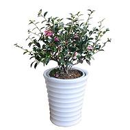 武汉植物租摆公司公司花木养护,武汉家庭园艺价格公司绿化养护