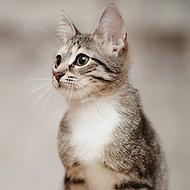土猫养殖,家猫养殖,田园猫养殖,狸花猫养殖-山东肆合肉猫养殖场
