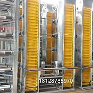 提供蛋鸡养殖设备 鸡粪处理设备 自动清粪设备 层叠蛋鸡设备