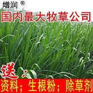 增润新型皇竹草种节 皇竹草种子种苗