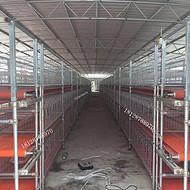 广东循环自动喂食鸽子的机器 循环自动清粪机 正谷制造家禽养殖机