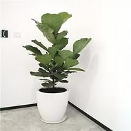 天津花卉租赁公司_绿植出租公司_花木租摆_室内植物绿植绿化