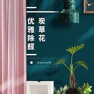 炭草花室内摆件吸除甲醛净化空气绿植盆栽