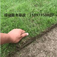 台湾青草皮~台湾草坪~台湾2号草坪~湖南郴州台湾草皮价格