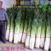 章丘大葱种子 ****家禄三号高产新品种 山东大葱种子