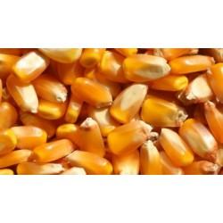 采购玉米,高粱,大米等酿酒原料