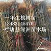 河北省出售批发果树苗
