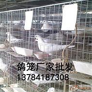 优质鸽子笼 厂家批发三层鸽笼 四层鸽子养殖笼 批发价格