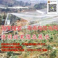 乖乖鸟牌尼龙网葡萄网樱桃网稻谷鱼塘防护网天网