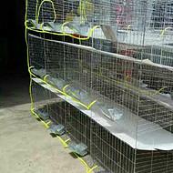 兔子养殖笼 兔笼子 商品兔笼 子母兔笼