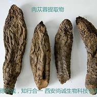 肉苁蓉萃取物 松果菊苷1-50%