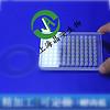 上海百千J09627石英不可拆96孔酶标板酶标仪石英微孔板96孔板石英微孔板