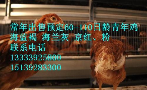 u=801498493,1349656837&fm=27&gp=0_副本