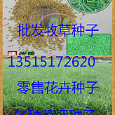 甜象草种子价格