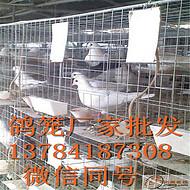 镀锌鸽子笼厂家批发【满达三层鸽笼】四层鸽笼售价便宜