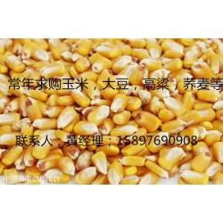 大型养殖场常年求购玉米碎米油糠麸皮等饲料原料