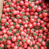 休宁西红柿苗 西红柿苗厂家培育 量大从优
