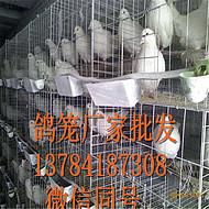 鸽子笼网片1鸽笼铁丝围2网片3铁网厂家批发/价格合理