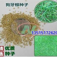 三叶草种子价格红 三叶草种子报价