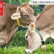 肉牛太瘦用什么饲料长肉快?利斯特肥牛王