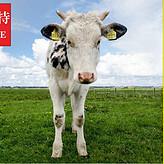 我想给家里小牛催肥快速长架子用点什么饲料,架子牛专用预混料。