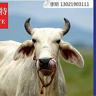 我家的牛太瘦了,怎么办? 利斯特肉牛快速催肥饲料