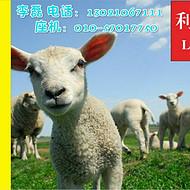 哪里的羔羊饲料好?羔羊喂什么饲料长势快?